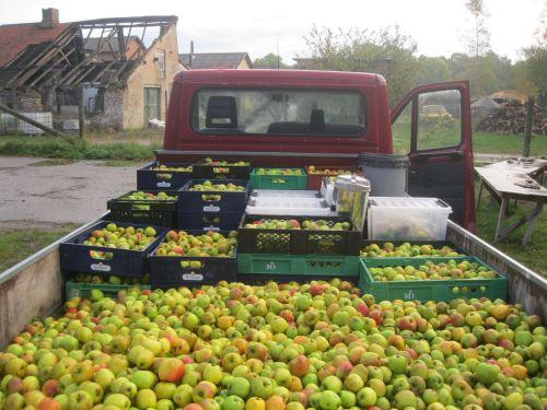 Madvaerket - apple harvest